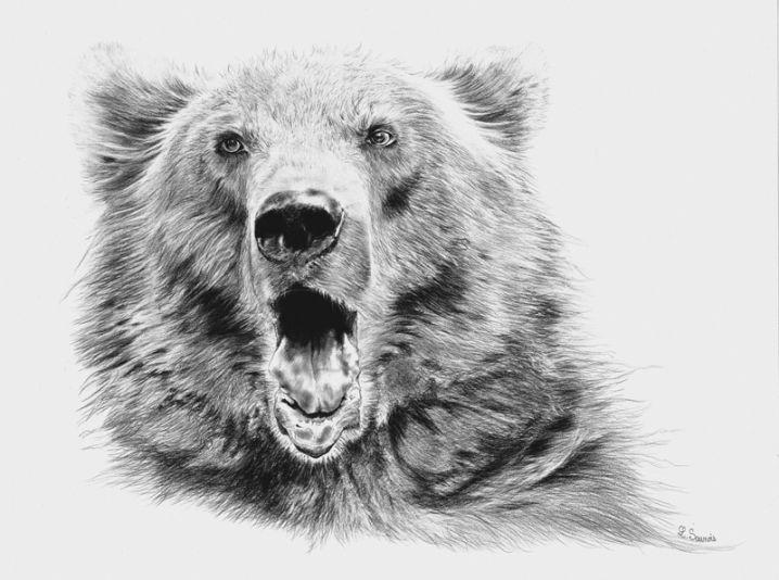 Ours des pyr n es dessin r alis au crayon par laurence - Dessin de grizzly ...